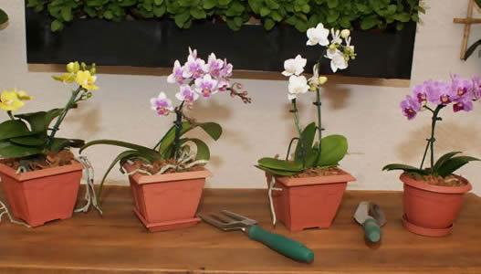 flores-no-vaso-decoracao-bem-estar-móveis-primavera